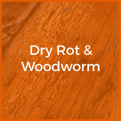 Dry Rot & Woodworm